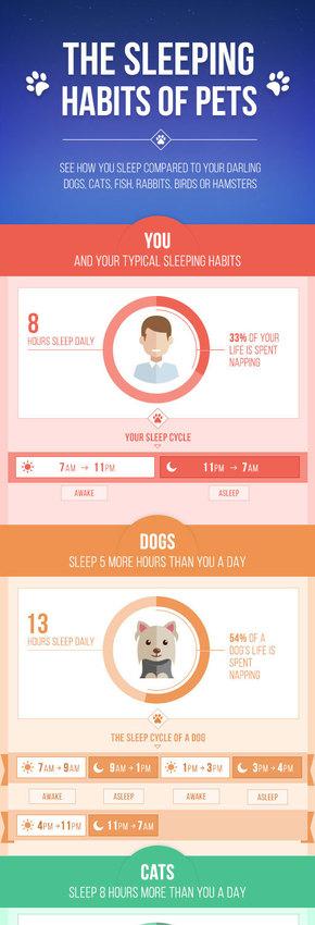 【演界信息图表】小清新-宠物的睡觉习惯