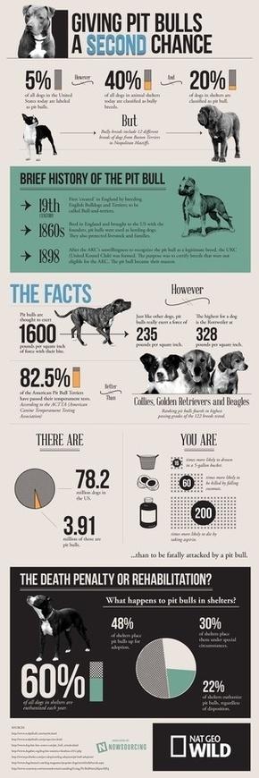 [演界信息图表]商务杂志风-给比特犬第二次机会