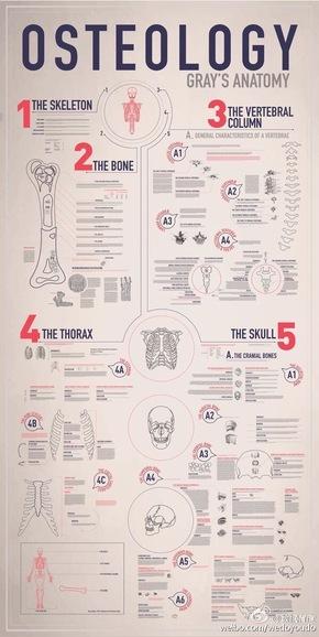 [演界信息图表]简约学术风-人体骨骼学