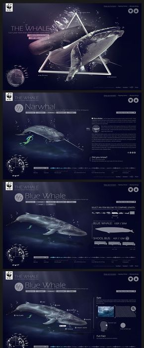 【演界信息图表】白色ios风-鲸鱼