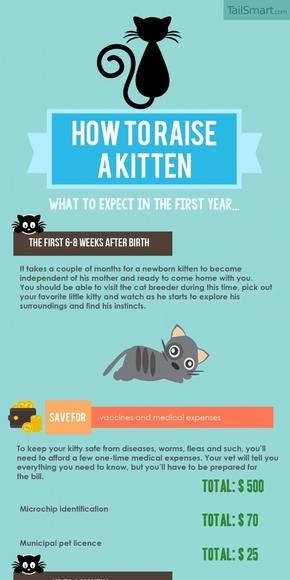 【演界信息图表】蓝底图文-怎样养一只猫
