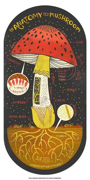 【演界信息图表】手绘介绍-蘑菇到底长什么样