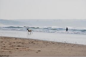 【图片分享计划】饿了的狮王_414 海岸 狗 人