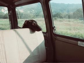 【图片分享计划】饿了的狮王_491 汽车 狗