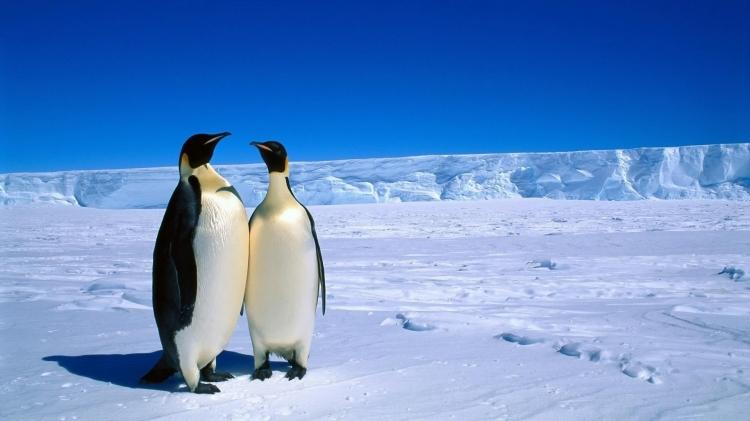 壁纸 动物 企鹅 750_421