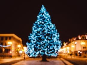 【图片分享计划】  黑色蓝色树黄色灯光