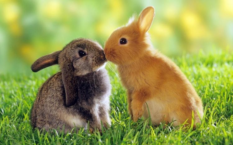 动物仔免费下载–演界网