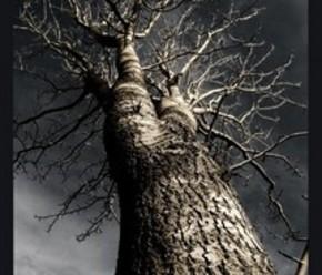 【BANNER分享计划】树  439