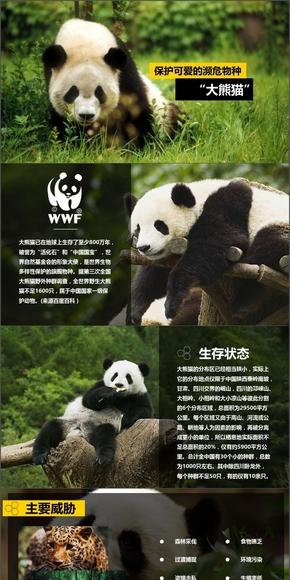 宣传保护大熊猫ppt