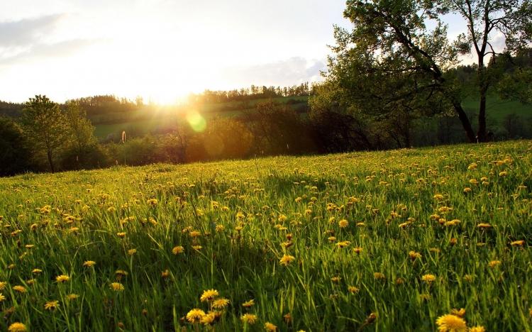 陽光明媚圖片風景