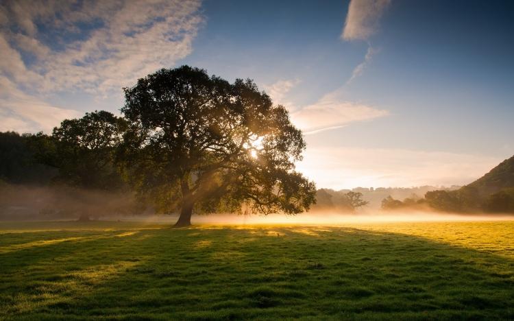 图片素材 阳光简单大方ppt模板 【桌面壁纸】阳光与树09  作品标签