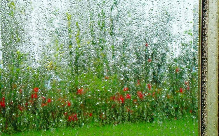 【桌面壁纸】雨中唯美创意13   关键词:下雨  玻璃  窗外  风景