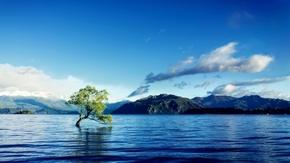 【桌面壁纸】湖中树