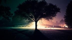 【桌面壁纸】夜晚灯光树