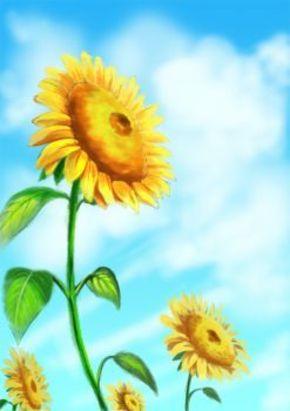 【桌面壁纸】直冲云霄之向日葵