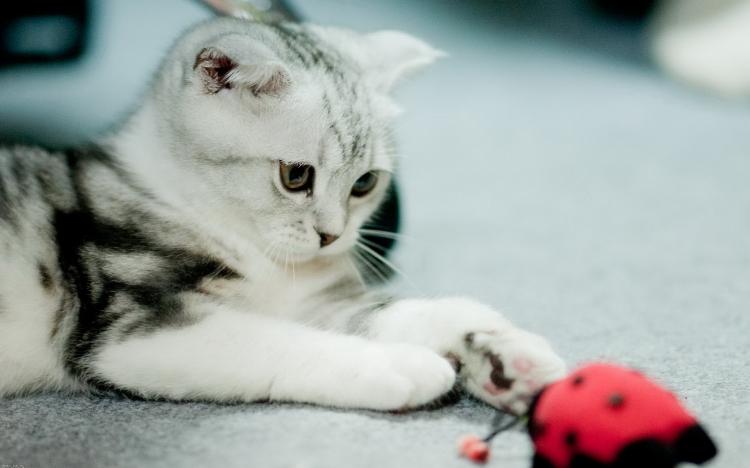 作品标题:【桌面壁纸】可爱小猫