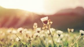 【桌面壁纸】阳光下的花