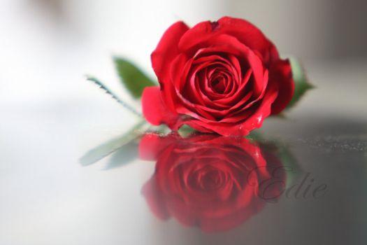 魅惑玫瑰图片_作品标题:【桌面壁纸】诱惑玫瑰
