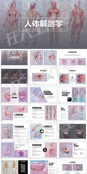 专业医学keynote—人体解剖学