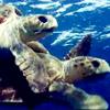 雄海龜丶米爾頓