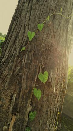 棕色树木纹理