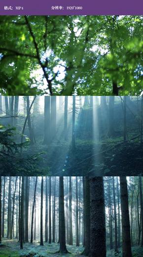 森林树木实拍视频