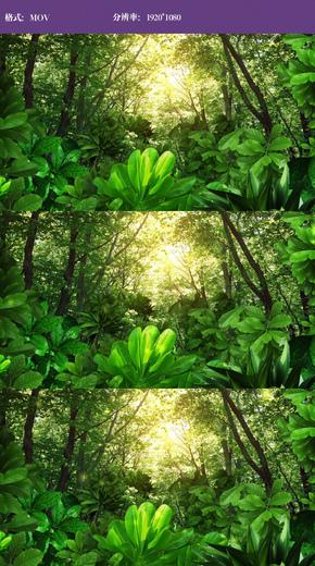 唯美森林风景视频