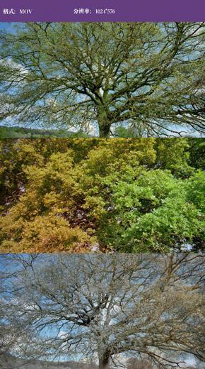 树叶四季变换视频