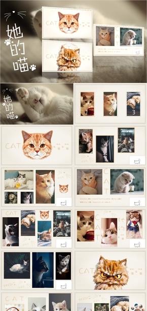 高端动态萌宠猫咪清新图片相册宣传画册宠物PPT