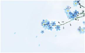 精选1款唯美蓝色小花PPT背景图片