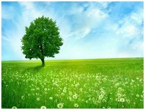 精选1款蓝天白云草原绿树PPT图片