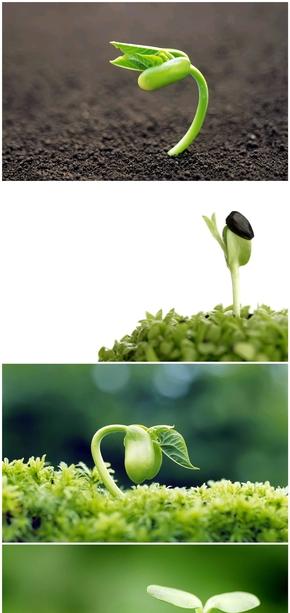 精选11款种子发芽嫩芽幼苗PPT背景图片