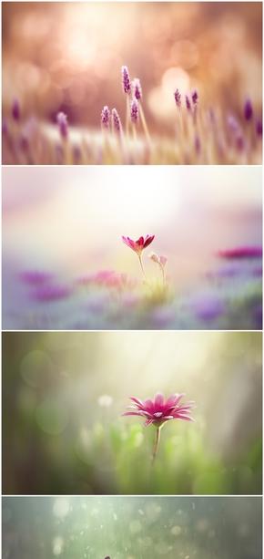 精选6款朦胧唯美花朵小花PPT背景