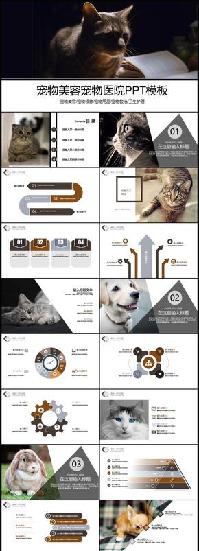 宠物美容宠物医院宠物领养用品救治卫生护理PPT模板