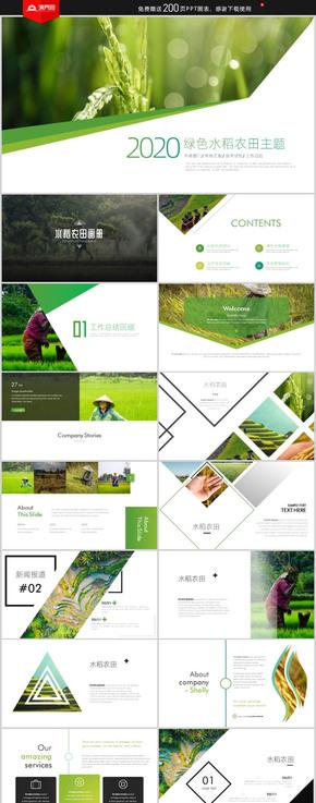 綠色水稻農田農業種植科技糧食作物生產PPT模板