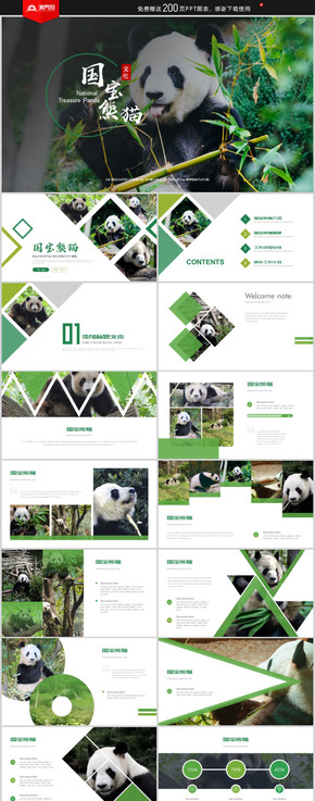 綠色簡約國寶熊貓攝影畫冊保護動物PPT模板