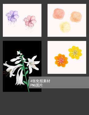 4张免抠png花卉素材