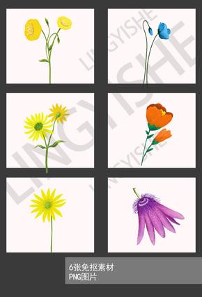 6张花卉插画免抠png素材