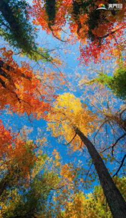 樹林樹葉唯美照片