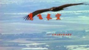鹰飞长空——  平顶山循环农业探索