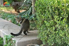 煙臺山的貓