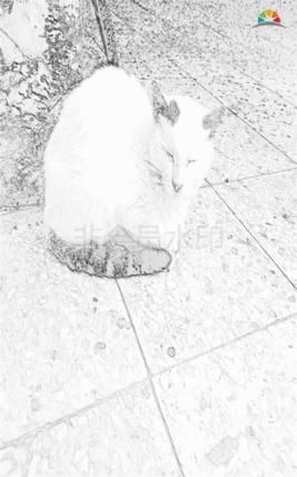 一只孤獨等待的貓