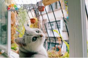 回頭貓可愛小貓咪么么噠小白貓高清圖片