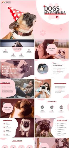 【寵物系列】巴哥犬--狗狗,我的朋友