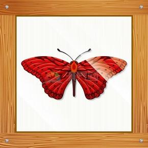 木质边框蝴蝶标本矢量图