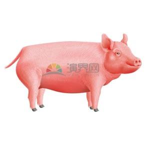 卡通矢量可爱动物猪