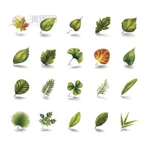 叶子绿叶花卉花苞合集