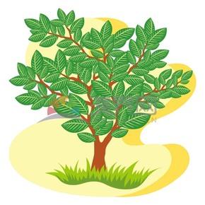 绿洲上的一棵树