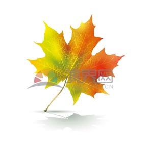 秋天黄色渐变枫叶叶子素材
