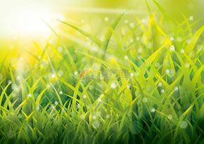 春天绿色青草背景